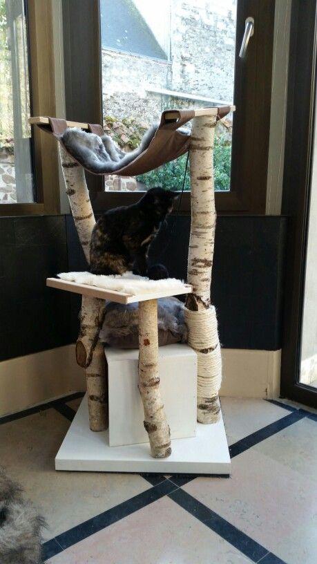 Un arbre à chat en anglais