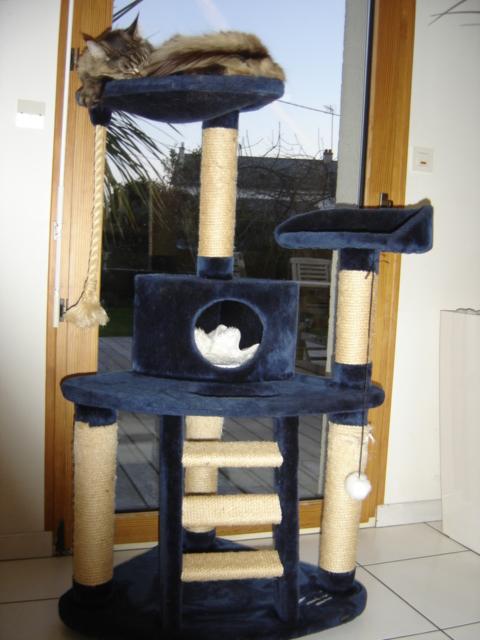 arbre a chat gros poteau. Black Bedroom Furniture Sets. Home Design Ideas