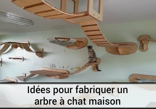 arbre a chat incroyable