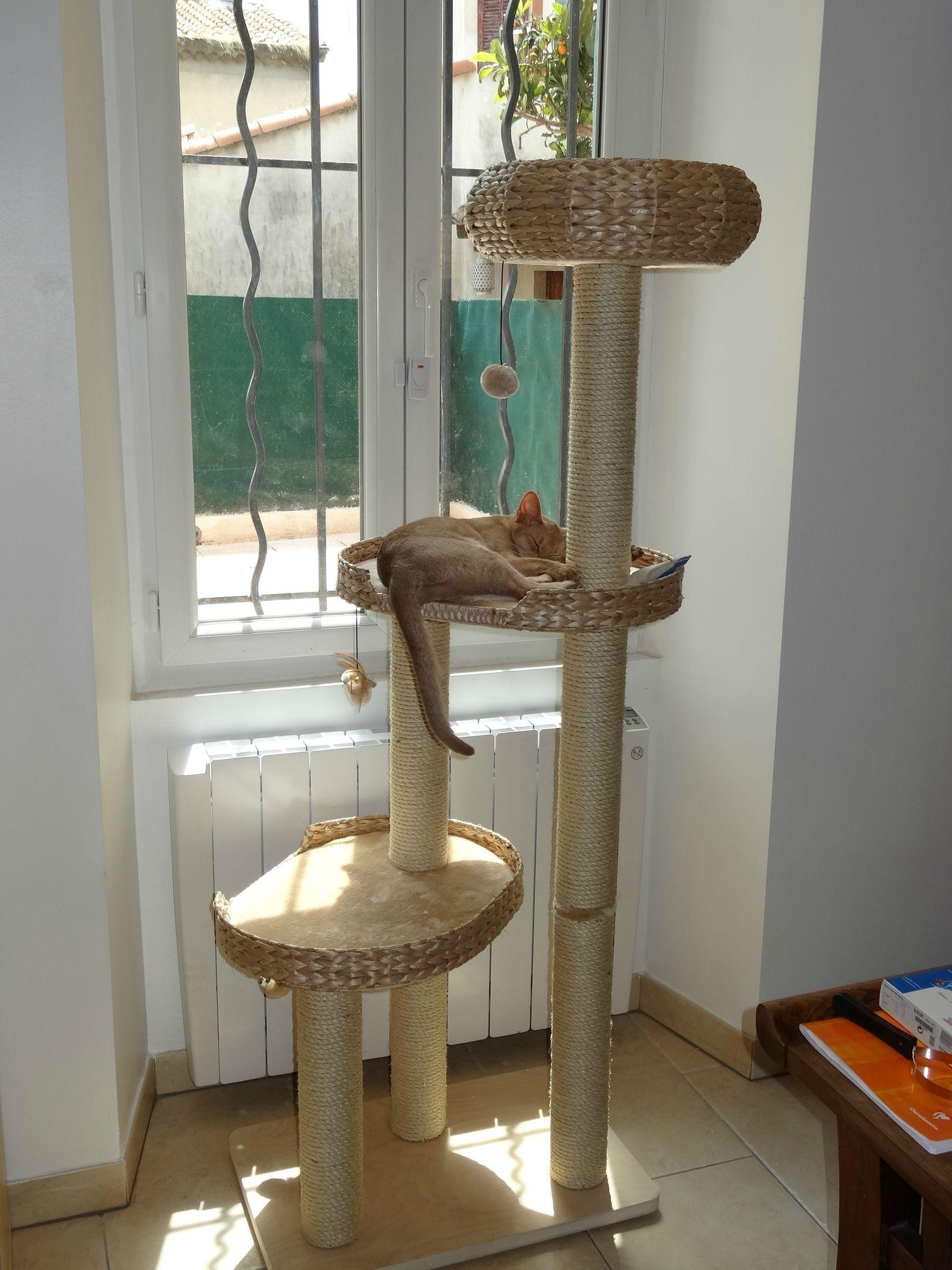 arbre a chat jacinthe d 39 eau. Black Bedroom Furniture Sets. Home Design Ideas