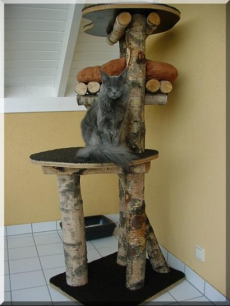 arbre a chat pour l 39 exterieur. Black Bedroom Furniture Sets. Home Design Ideas