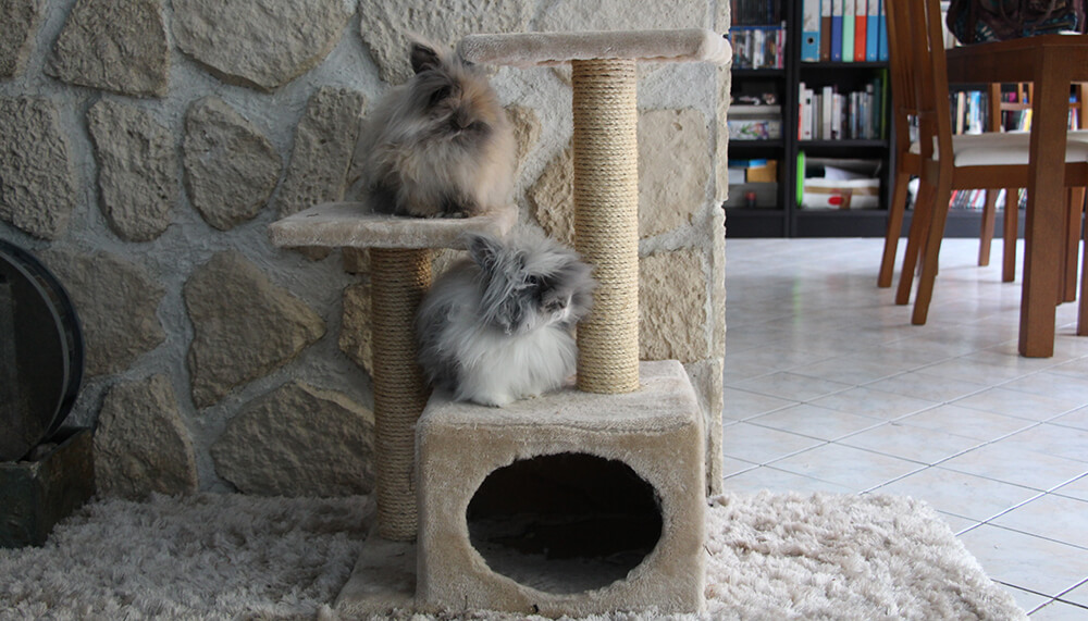 arbre a chat pour lapin. Black Bedroom Furniture Sets. Home Design Ideas